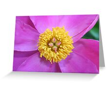 Pink and Yellow Peony Greeting Card