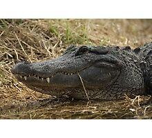 American Alligator - grin Photographic Print