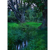 Magical Woodland Glade Photographic Print