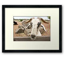 Goofy The Goat Framed Print