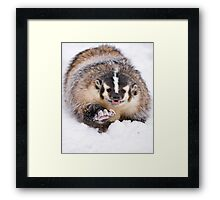 Boxing Badger Framed Print