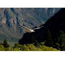 Wings of Freedom IV Photographic Print