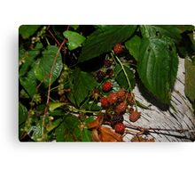 Ripe Rasberries Canvas Print