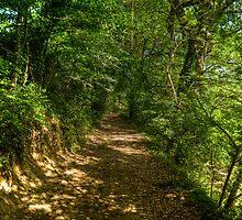 Golden Path by Davide Ferrari