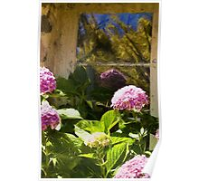 Hyacinths in the Window Poster