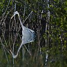 Heron Reflection by JimSanders