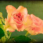 Vintage Roses by friendlydragon