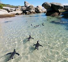 Penguins at Boulders Beach  by Neil  Bradfield