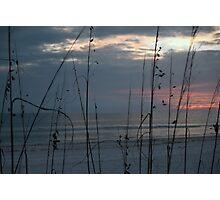 through the grass Photographic Print