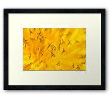The Beautiful Dandelion Framed Print