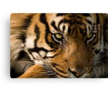 Eye of the  Sumatran Tiger Canvas Print