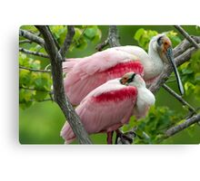 Two Male Roseate Spoonbills Canvas Print