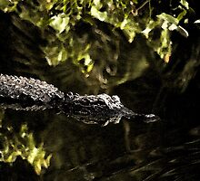 Gator with watercolour filter by JimSanders