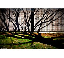 Morning Shadows at Jordan Pond House Photographic Print