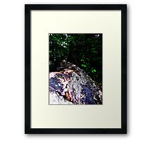 if a tree falls in the woods ... Framed Print
