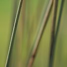 Rushes by Claire Armistead