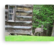 Deer licking his lips Canvas Print