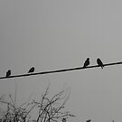 Counting crows. by Elissa  .