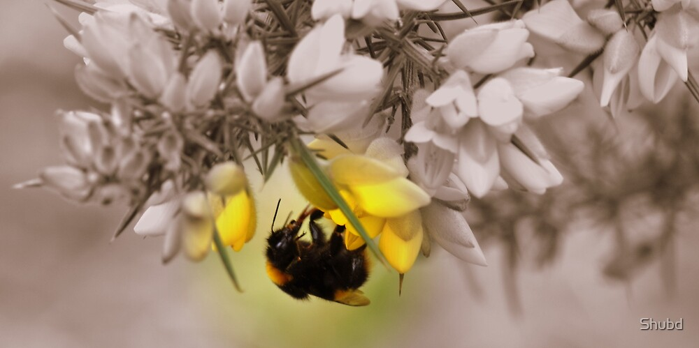 Light of the Bumble Bee by Shubd