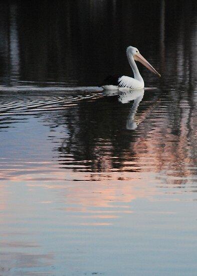 Pink Pelican by Graham E Mewburn