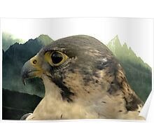 The Tiercel Poster
