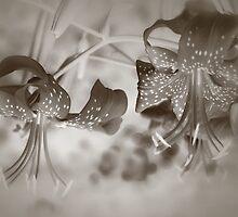 Silver Tones by Danuta Antas