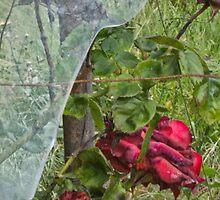 Roses and Broken Promises by misterken
