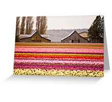 The famous barns at Tuliptown, Skagit Valley, WA Greeting Card