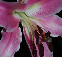 Pink Lily by Geraldine Miller