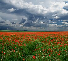 Clearing storm over poppy field Valensole Plain France by Eros Fiacconi (Sooboy)
