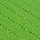 Green Fields by Kasia Nowak