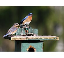 Bluebirds of Happiness  :o) Photographic Print