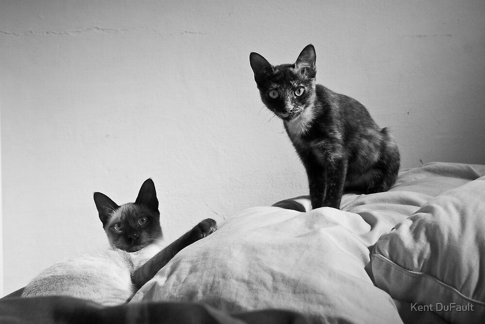 Bella and Lolita 01 by Kent DuFault