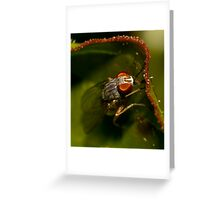 The first fly of the year Greeting Card