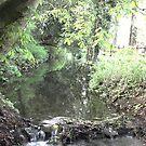 The River Coln - Bibury UK by Daisy-May