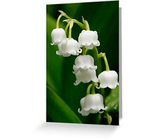Lily of the Valley (Convallaria majalis) Greeting Card