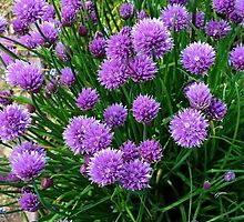 Chives by Simon Duckworth