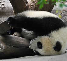 The world as Yun Zi sees it by Bob Hortman