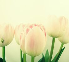 Antique Tulips II by Caroline Fournier
