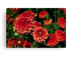 Red and Orange Dahlias against Foliage Background Canvas Print