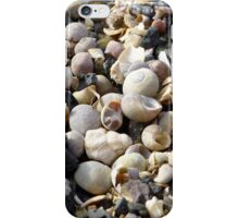 Muscheln & Schneckenhäuser - shells & snail shells iPhone Case/Skin