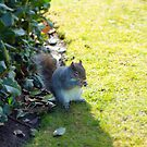 Mr Squirrel in Kensington Palace grounds by blindskunk