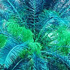 Lacy Blue Palms by Rosalie Scanlon