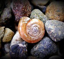 stranger in the stones by amanda korte