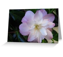 Ethereal Camellia Greeting Card