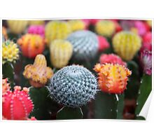 Cactus, Flowers, Spines - Pink Green Blue Yellow  Poster