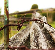Fence: Stake, thorns and an old tree by shilohrachelle