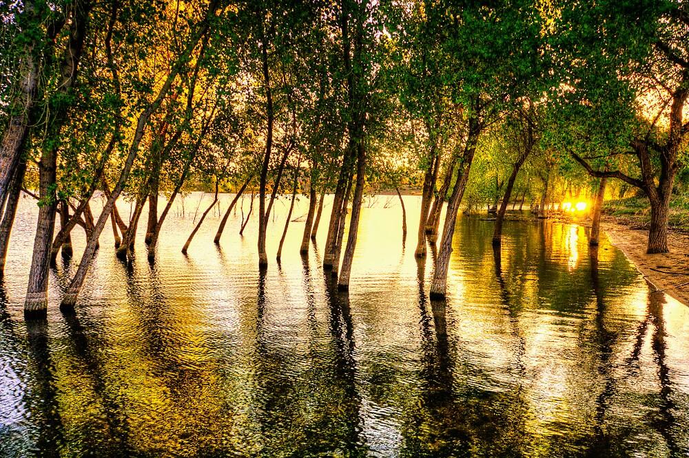 Tree Flood by Bob Larson