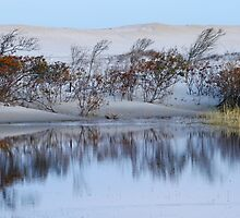 Dunes Reflections- Assateague by Jeff Holcombe