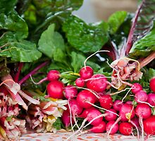 Radishes & Rhubarb by phil decocco